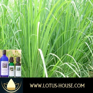 Lemongrass - Certified Organic 100% Essential Oil