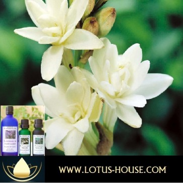 Tuberose French 100% Essential Oil @ Lotus House