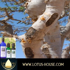 Frankincense - Certified Organic 100% Essential Oil
