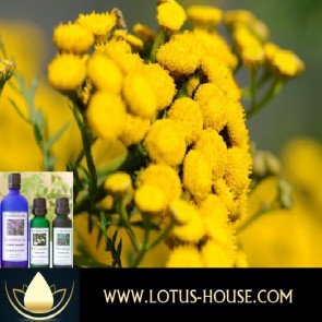 Immortelle French - Certified Organic 100% Essential Oil