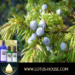Juniper Berry - Certified Organic 100% Essential Oil