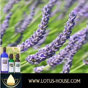 Lavandin - Certified Organic 100% Essential Oil
